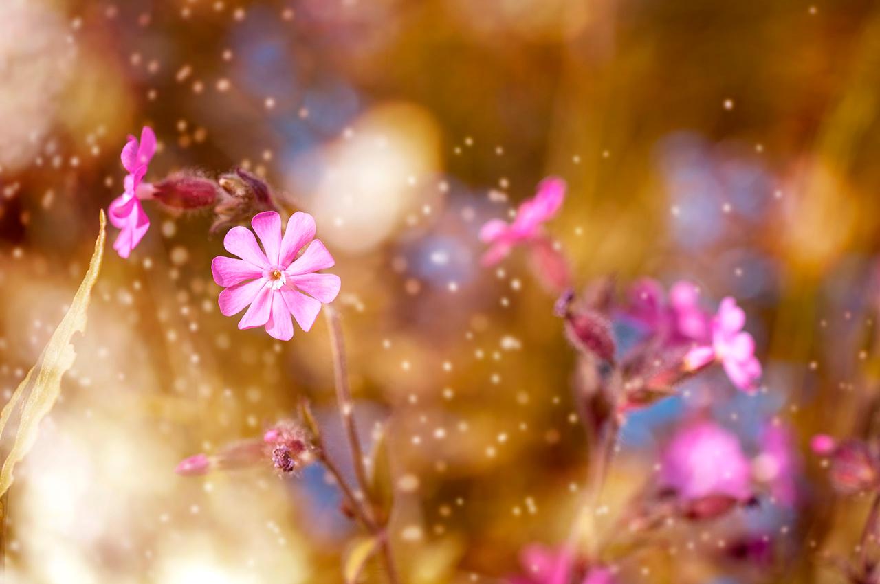 remerciements maud com fleurs